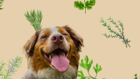 herbs to help dogs transition to raw