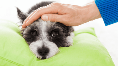 Holistic care for sick pets