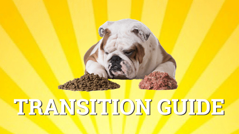 How to transition to raw dog food