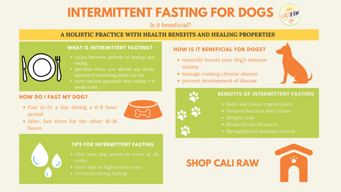 intermittent fasting for dogs infograph