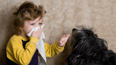 Kid with dog allergies next to long haired black dog
