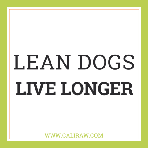 Lean Dogs Live Longer Banner