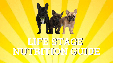 Life stage nutrition guide