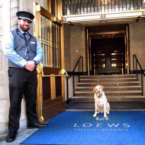 Loews dog friendly hotel and resort in california
