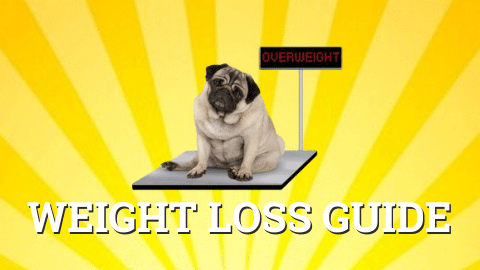 How to help an overweight dog lose weight guide