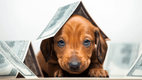 dogs can help save on taxes