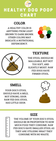 Is my dog poop normal infograph