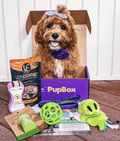 Puppy Subscription Box
