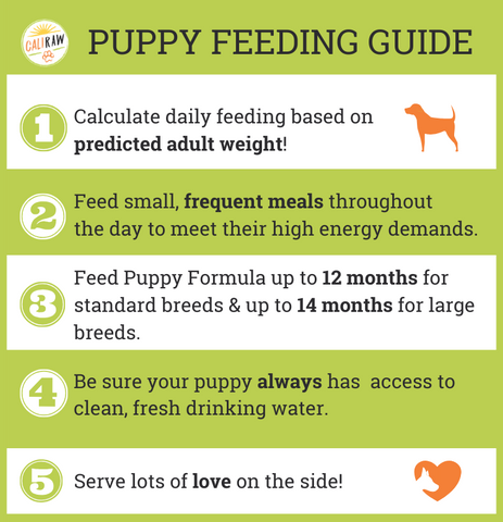 puppy raw feeding tips