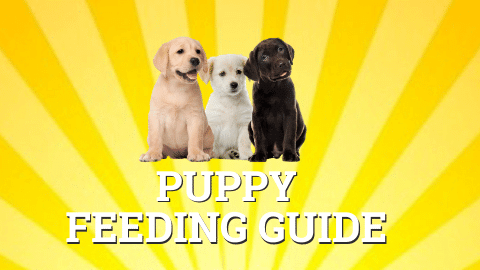 Raw Puppy Food Guide
