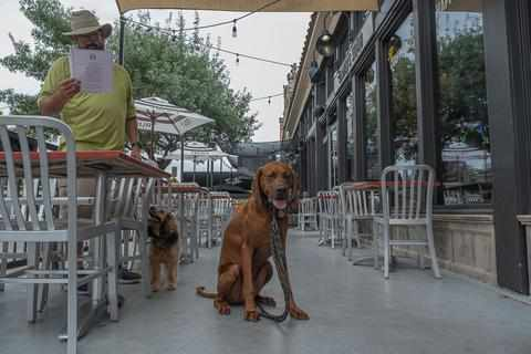 Slaters Dog Friendly Outside Patio in Southern California