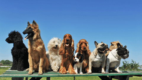 Top dog breeds commonly owned