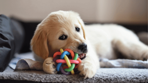 What toys are toxic for dogs