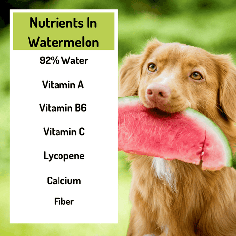 Watermelon for dogs infograph