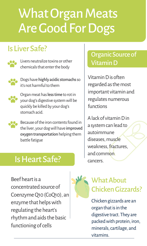 organ meat good for dogs infograph