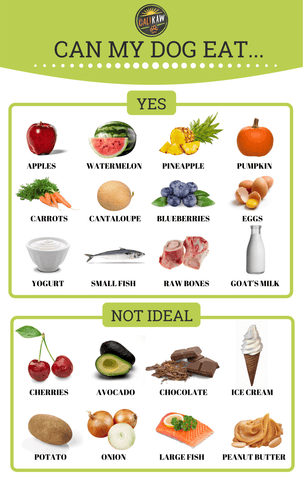 Natural Food for dogs infograph