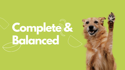 complete and balanced dog food blog banner