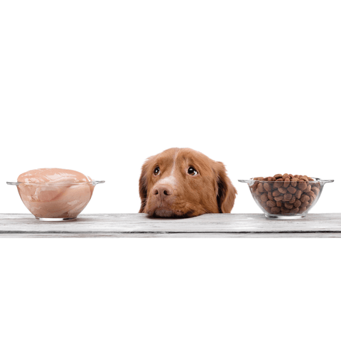 raw or kibble for dogs