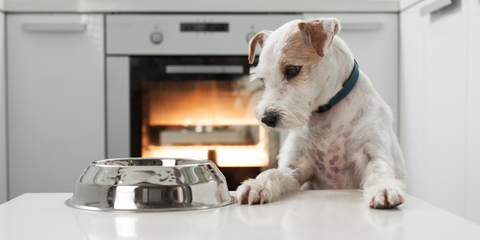 Intermittent Fasting For Dogs Health Benefits
