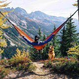 Dogs and owner on a camping trip