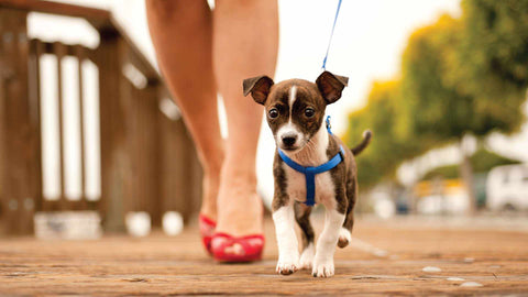 tips for dog walking