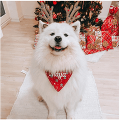 Cute fluffy white samoyed in front of a christmas tree instagram post