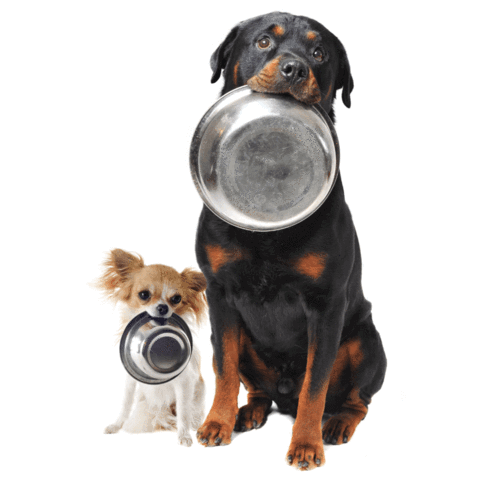 Raw dog food for small and big breed dogs