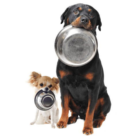 raw food for big and small dogs