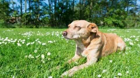 older dogs are more prone to health conditions like kidney disease