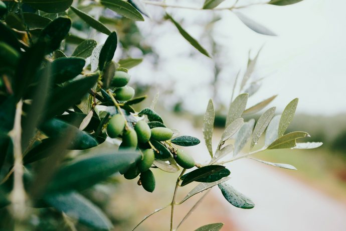 Ingredient Spotlight: EVOO