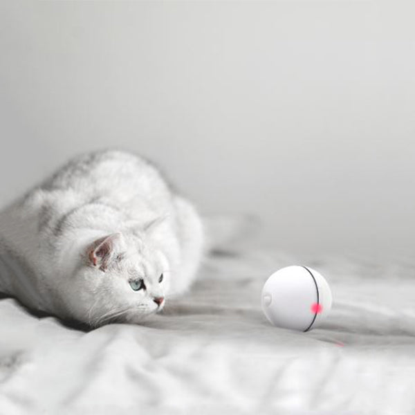 Magic Cat LED Ball