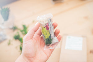 DIY Terrarium Kit With Live Succulent - Green Earth Terrarium LLC