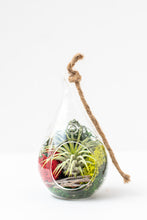 Load image into Gallery viewer, Hanging Air Plant Terrarium (teardrop) - Green Earth Terrarium LLC