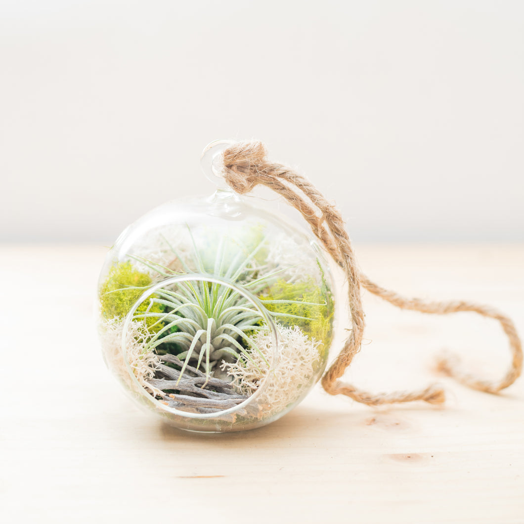 Hanging Air Plant Terrarium (round) - Green Earth Terrarium LLC