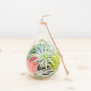 Hanging Air Plant Terrarium (teardrop) - Green Earth Terrarium LLC