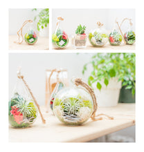 Load image into Gallery viewer, Hanging Air Plant Terrarium (round) - Green Earth Terrarium LLC