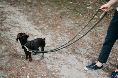 "Hands-free leather dog leash ""Lasso"" - Animal Planet"