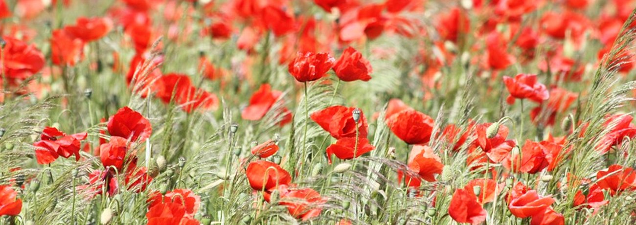 Remembrance Sunday - 11th November