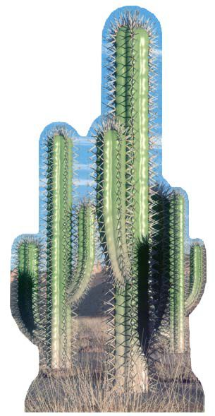 Cactus Group Cardboard Cutout - 1.52m
