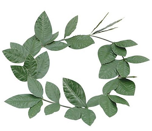 Green Laurel Leaf Headband
