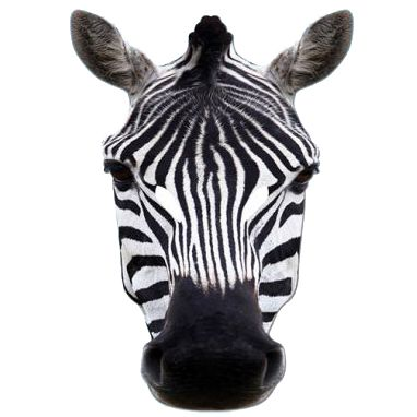 Zebra Card Mask