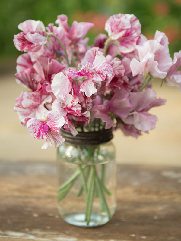 Chocolate Sweet Pea Flowers in a Vase