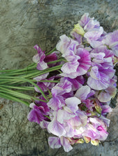 Bouquet of Pandemonium Sweet Peas