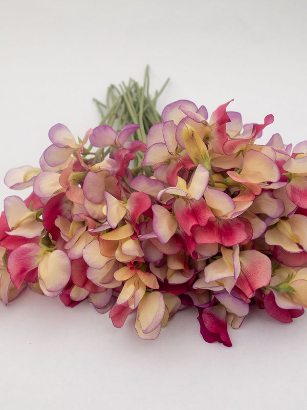 Bouquet of Spanish Dancer Sweet Peas