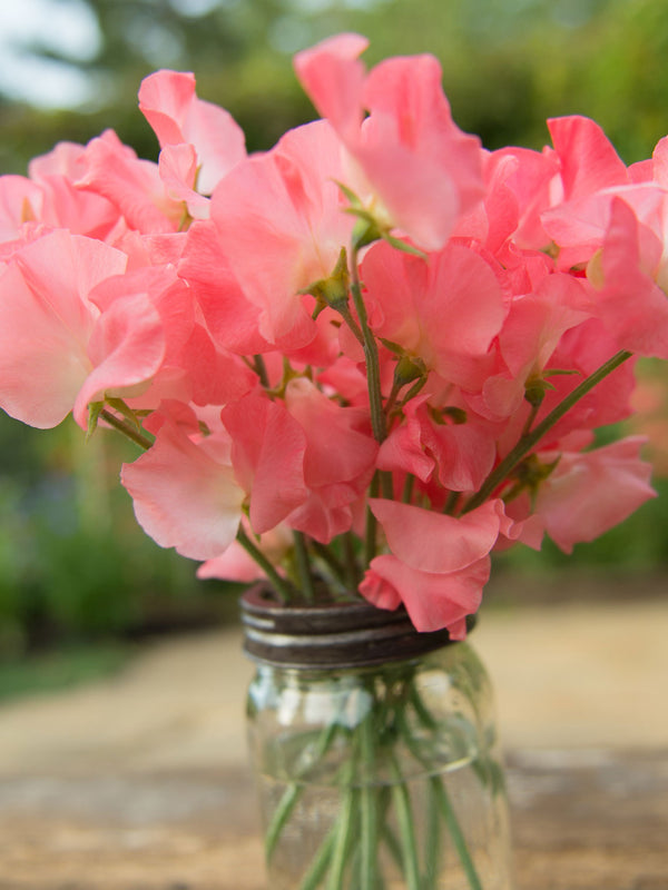 Valerie Harrod Sweet Pea Flowers in a Vase