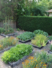 Growing a beautiful vegetable garden consultation