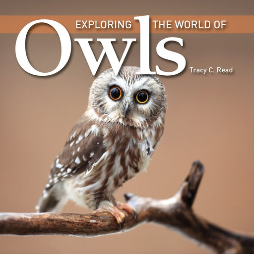 Exploring the World of Owls