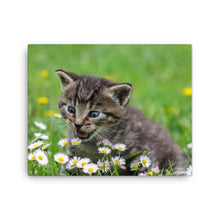 Load image into Gallery viewer, Cat and Flowers, Canvas Wall Art
