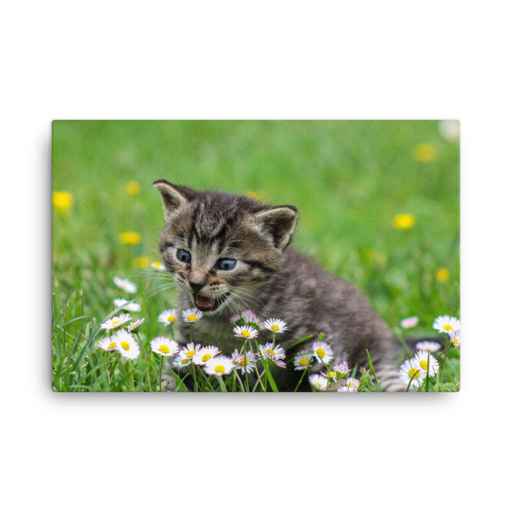 Cat and Flowers, Canvas Wall Art