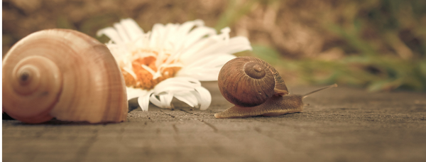 The Benefits of Snail Mucin in Skin Care